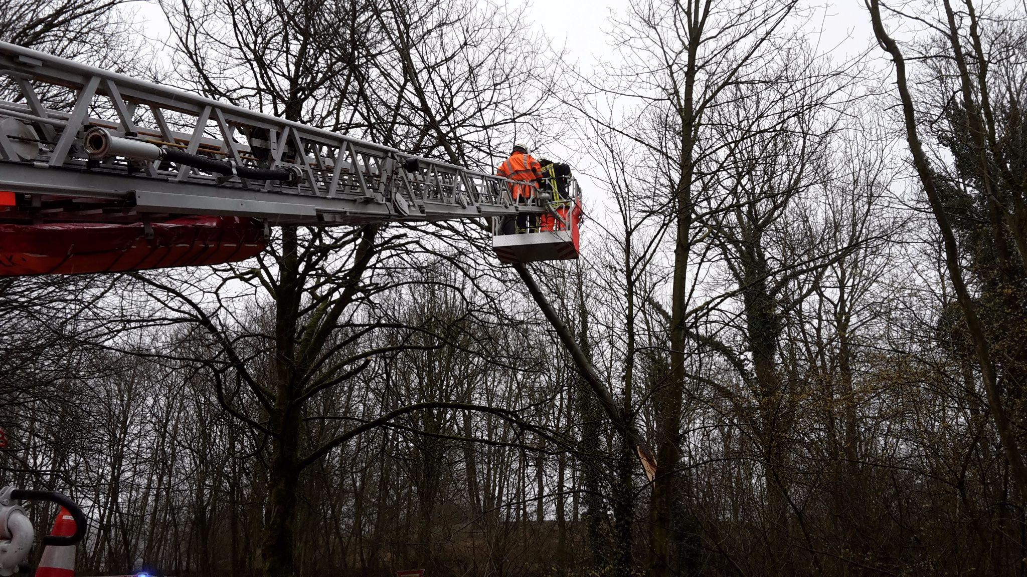 Der Baum war in ca. 5 Meter Höhe gebrochen und nur von der Drehleiter sicher zu erreichen.